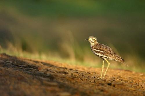 Birdwatching ....